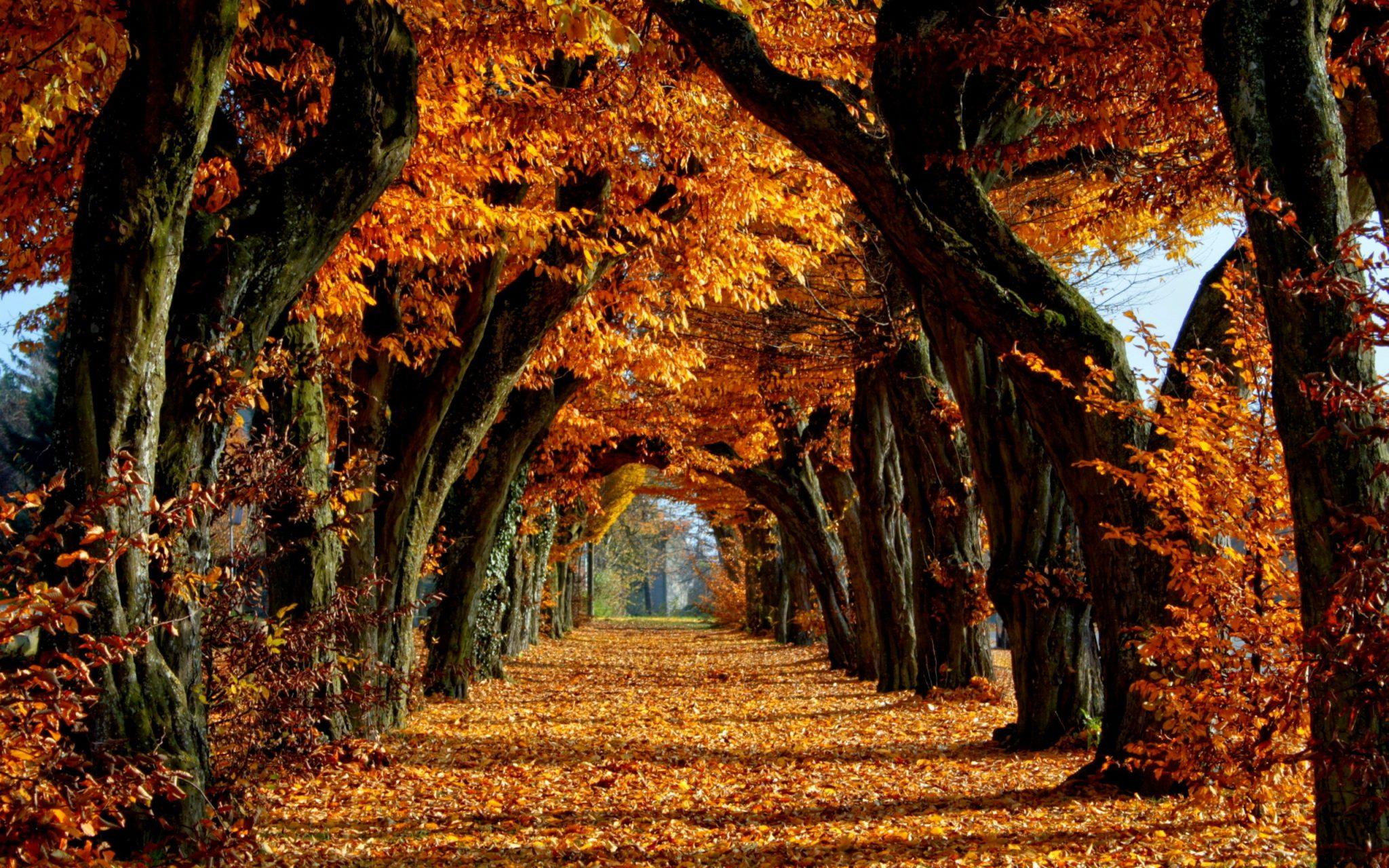 Осеннее стихотворение