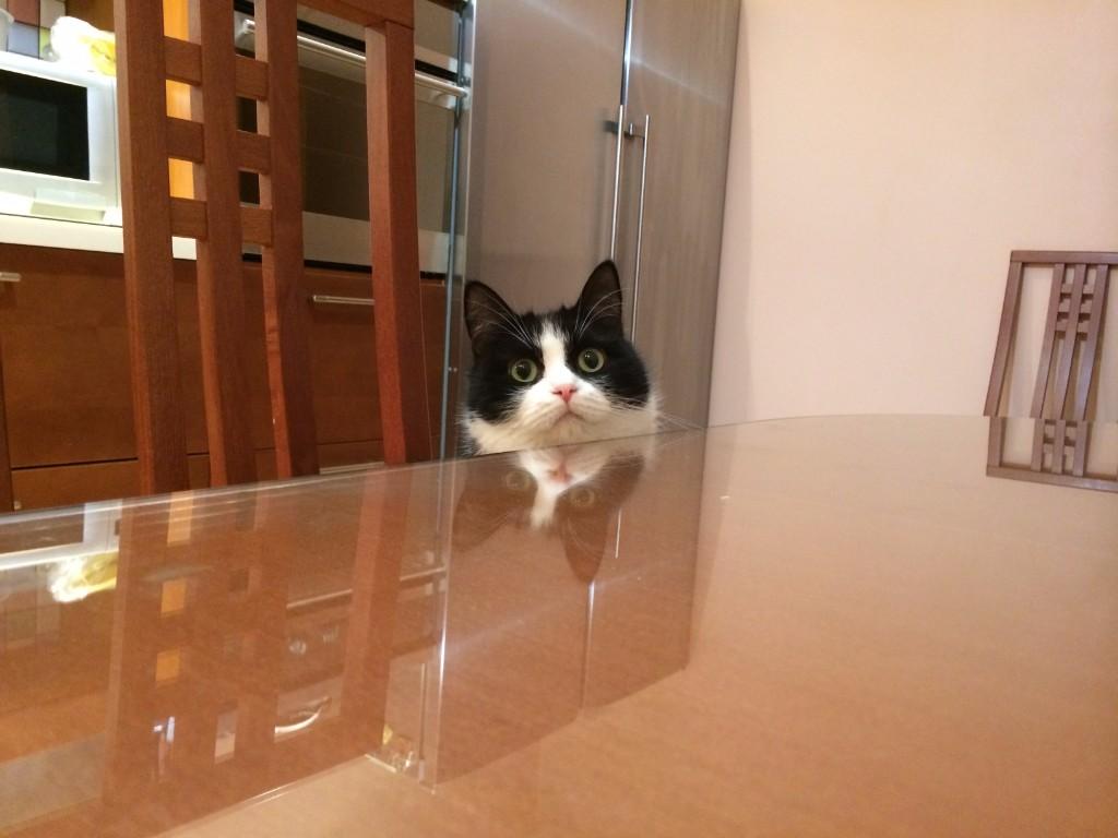 Кошачьи истории. Про кошку Дусю.