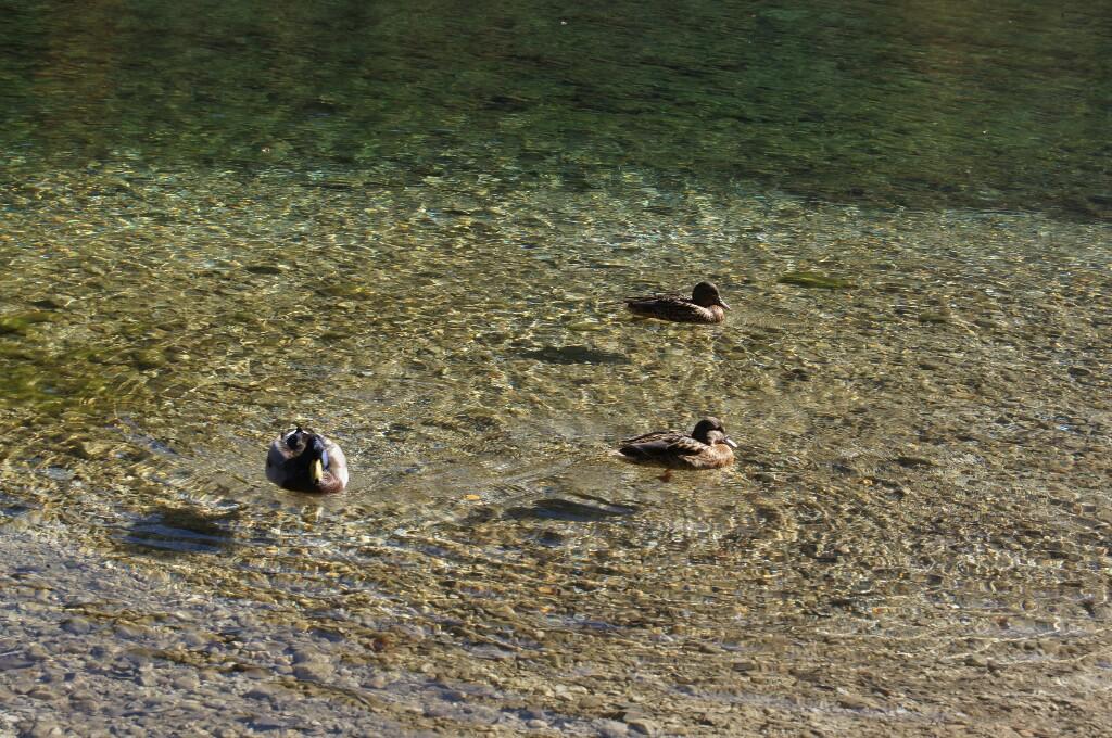 DSC07574 1024x680 - Озеро Ясна – как ты прекрасно!