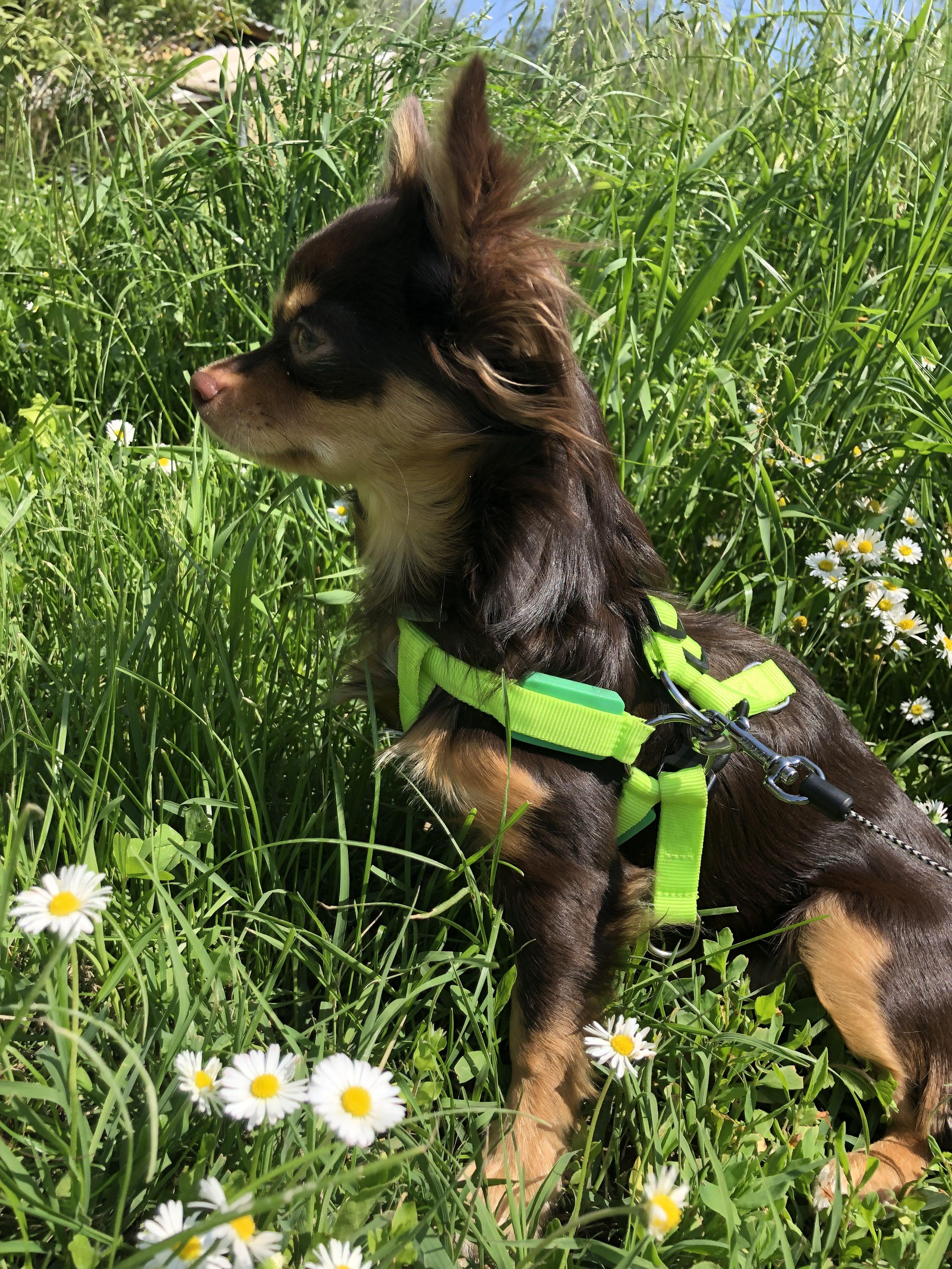 Моя собака Боня.