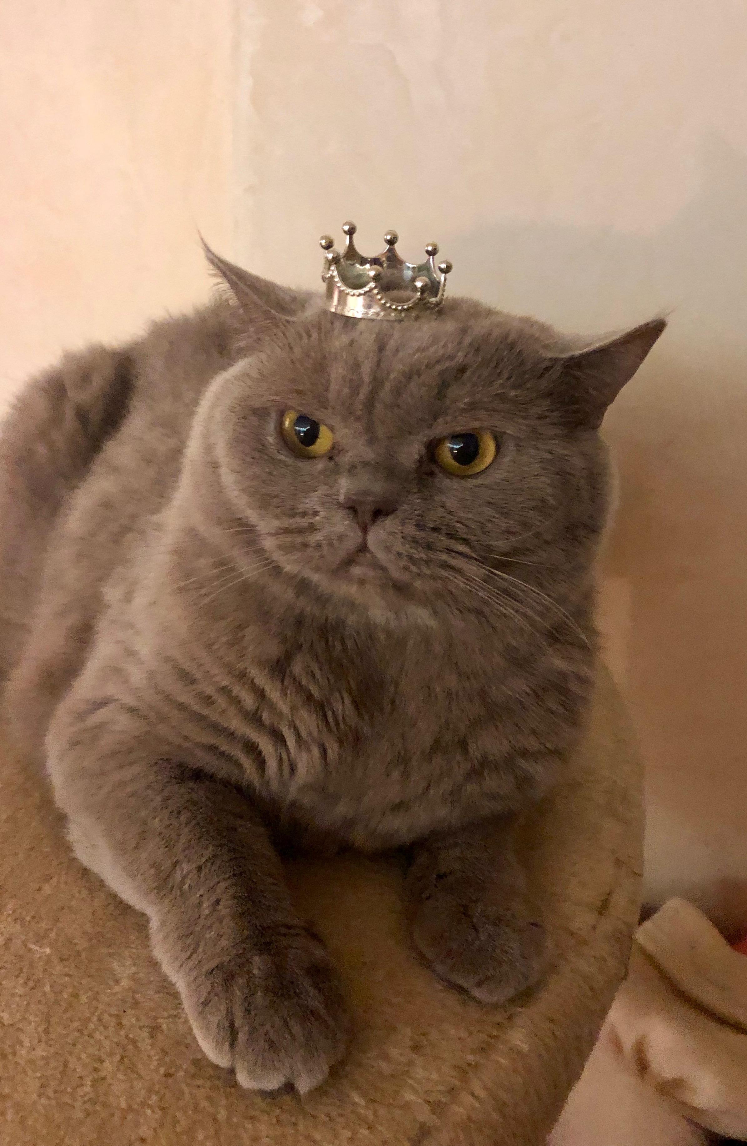 Кошка Агата.