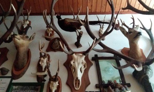 Трофеи охотника